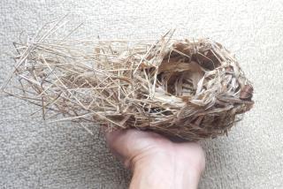 ウグイスの巣3.JPG
