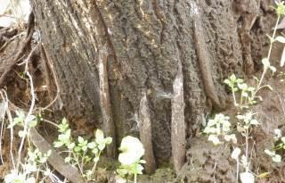 ジグモの巣.JPG