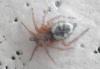 虫 な クモ みたい